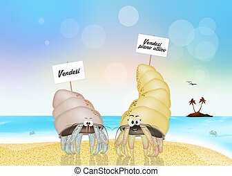 funny hermit crabs - funny illustration of hermit crabs on...