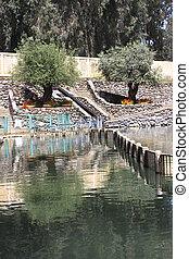 jordan river - baptising place on the jordan river in israel