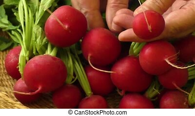 Fresh radishes at the farmers market