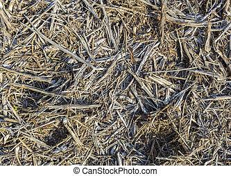 madera, escofina, en, el, suelo