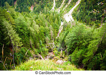 Top of forest in Slovenian Alps - View on evergreen forest...