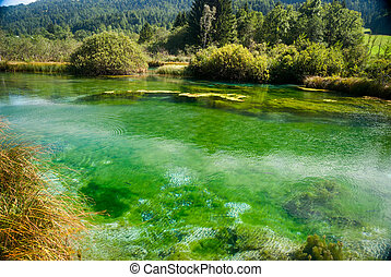 Zelenci - Sava river spring in forest - View on bright green...