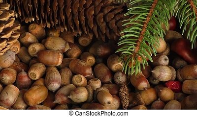 Autumn gifts: cones, acorns - Autumn gifts: chestnuts,...