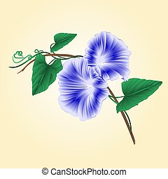 Morning glory Blue spring flower vector.eps - Morning glory...