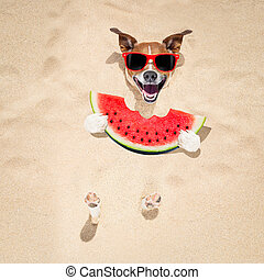 dog at the beach and watermelon - jack russell dog buried in...