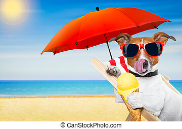 dog beach chair - jack russell dog eating ice cream on a...