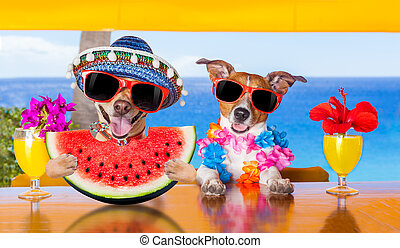 dog at the beach and watermelon - funny couple of dogs...