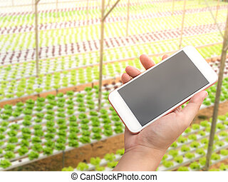 Hand holding smartphone with hydroponic vegetables growing...