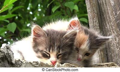 two kittens alert