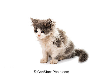 street kitten on a white background