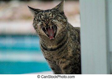 mn - cat