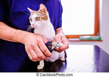 veterinário, corte, unhas, Para, CÙte, pequeno, gatinho, em,...