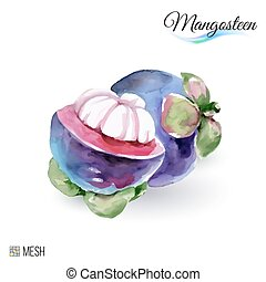 Mangosteen Fruit - Hand-Drawn Watercolor Painting Mangosteen...