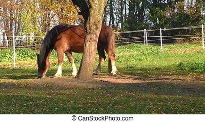 Beautiful horse eating grass