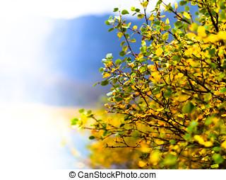 Horizontal vivid right aligned yellow bush bokeh background...