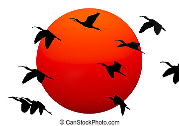Birds Silouettes - Silhouettes of large birds flying against...