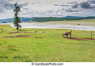 Lone tethered horse, northern Mongolia - Lone tethered horse...