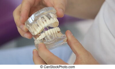 Doctor twists in hands of transparent dental model closeup....