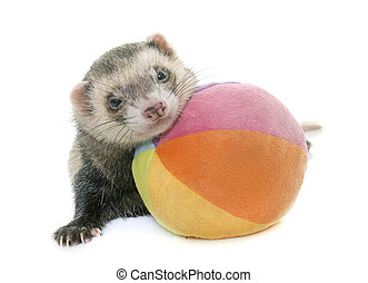 playing ferret in studio