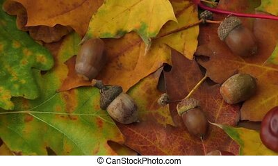 Chestnuts, acorns and autumn leaves - Autumn background -...