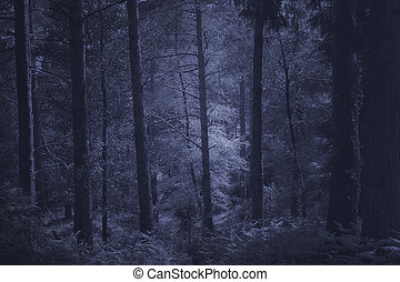 Mysterious deep forest - Mysterious misty deep forest in...