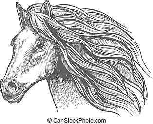 Mare or stallion young horse head sketch with mane - Mare or...