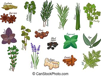 Spice and kitchen herb, condiment ingredients - Spice and...