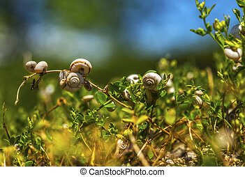 Bunch of snails on plants.