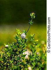 Small snail on a plant