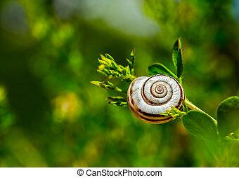 Snail on a grass - Single snail on a grass