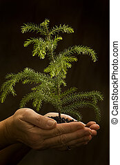 Holding New Life - Vertical shot of a ladys hands holding a...
