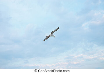 Seagul against a beautiful sky with clouds. Nature...