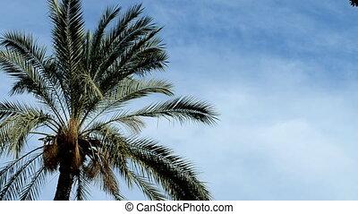 Palme leaves - Palm leaves Tropical blue sky