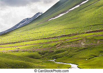 Sheep on a green meadow in the mountains