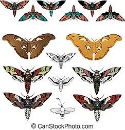 Butterflies, moths - vector graphics.