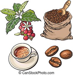 Evolution of coffee from berries to beans and espresso