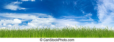 green gras - green natural grass in front of blue sky