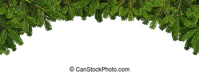 fir branches on white background