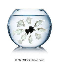 fish racism concept - racism concept in a fishbowl