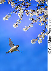 White blossom and bird flying in blue sky background