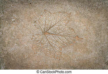 Leaf impression in stone