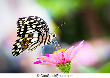 Butterfly perched on a flower - Colorful butterfly perched...