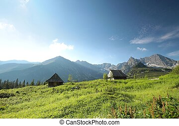 Peaks of the Tatra mountains - View from the valley to the...