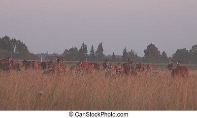 Wild deer animals herd grown enclosed with fence Zoom out 4K...