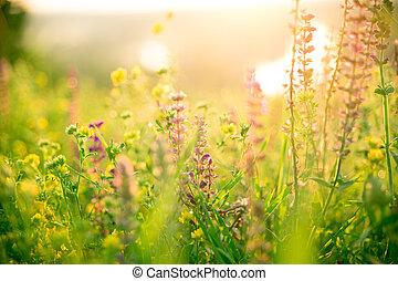 schöne, sommer, natürlich, Wiese, dämmern, blumen, landschaftsbild