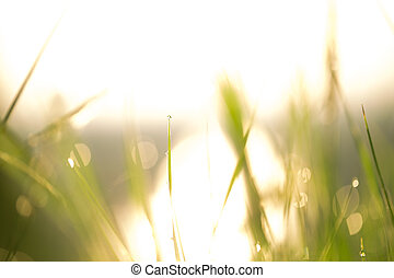 Morning landscape sunrise in the meadow, on the grass and...
