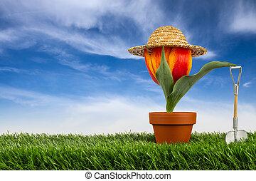 gardner - Tulpe mit Sonnenhut auf Wiese vor blauem Himmel