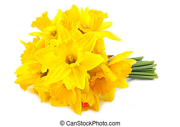 lent lily (daffodil) 1 - bouquet of yellow lent lily...