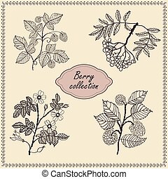 Collection of hand drawn berries