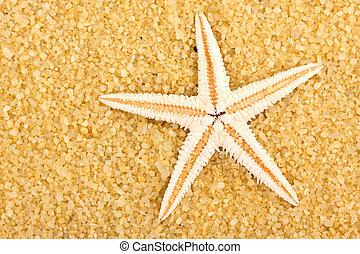 sea star 2 - a sea star on the sand of beach